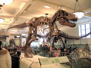 T-Rex Skeleton Display